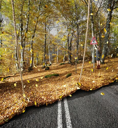 L AUTOMNE ARRIVE - ALASTAIR MAGNALDO - Photograph