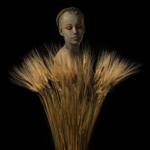 ROOTS WHEAT - ALFREDO SANCHEZ - Photographie