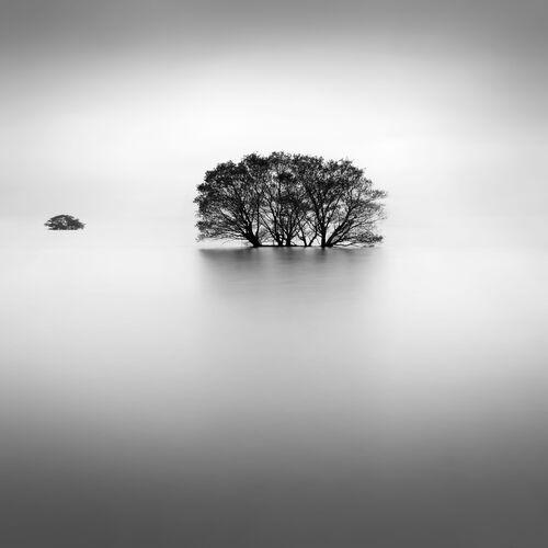 L'ARBRE NAUFRAGE - ALMA  - Photograph