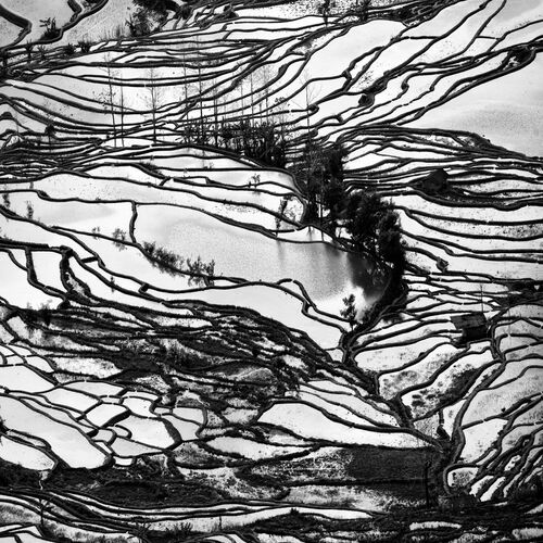 Organic Landscape - ALMA  - Photograph
