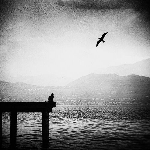 THE BLACK CAT PART 2 - ANDO FUCHS - Kunstfoto