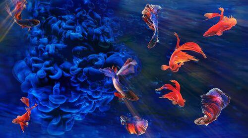 Aquamania 3 - BERNHARD HARTMANN - Photograph