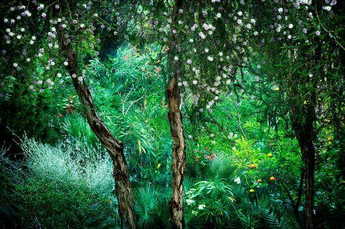 Le Jardin Eden 1 - BERNHARD HARTMANN - Photograph