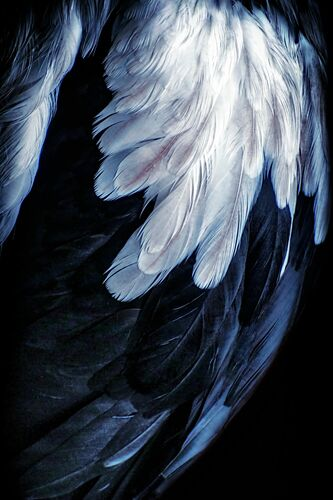 Avalanche - Carol Lyon - Photograph