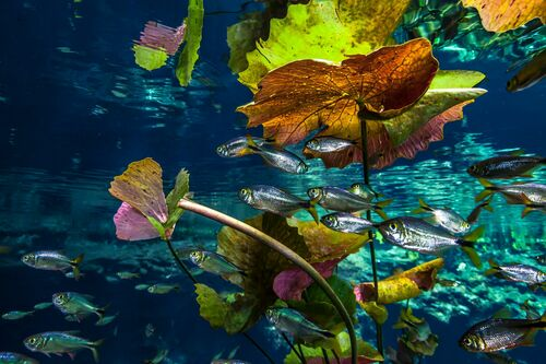FISHES AND PLANTS AT CENOTE NICTE-HA - CHRISTIAN VIZL - Kunstfoto