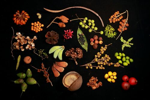 BHUTANS BIODIVERSITY - CHRISTIAN ZIEGLER - Fotografie