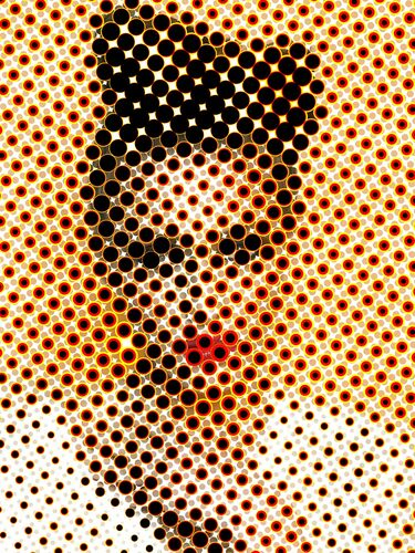 Fantasy mesh - Damien Mohn - Fotografie