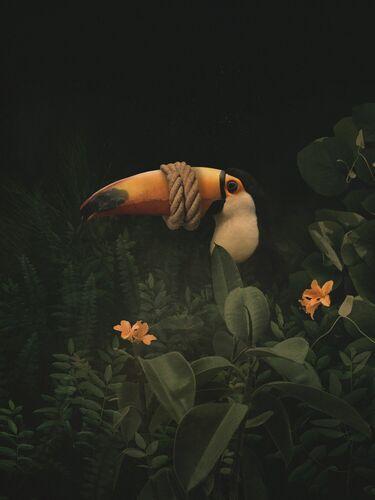 SILENCE - DAWID PLANETA - Fotografia