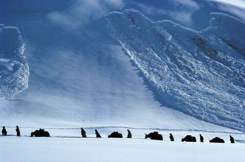 Yak Avalanche