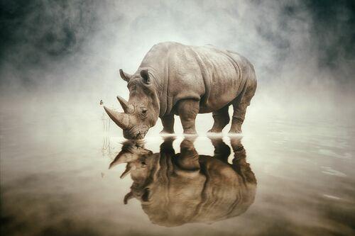 RHINO - FELIX HERNANDEZ DREAMOGRAPHY - Photographie