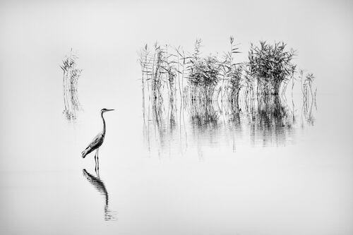 LAKE KARLA 006 - GEORGE DIGALAKIS - Photograph