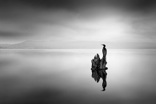 SOLITARY LIFE - GEORGE DIGALAKIS - Photograph