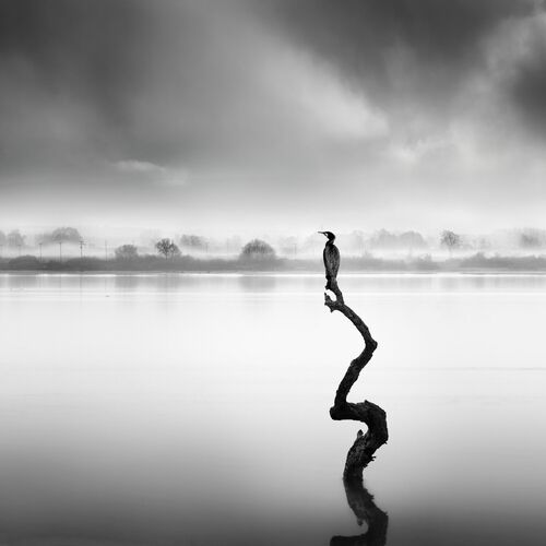 WHISPERS OF SILENCE - GEORGE DIGALAKIS - Photographie