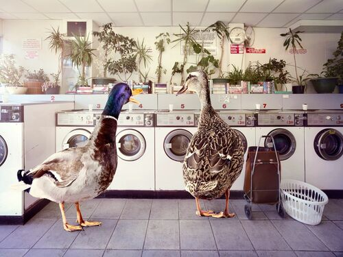 HOT GOSSIP AT THE LAUNDERETTE - GRAHAM TOOBY - Photograph