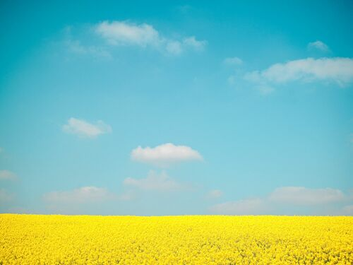 SKY OVER FLOWERS - HEROD BECEN - Photograph