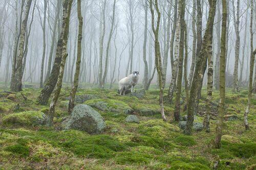 Forest Guardian - James Mills - Photograph