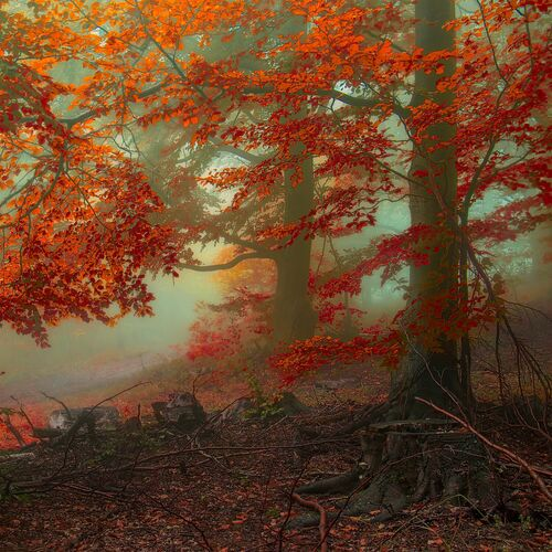 Ancient Calling of Autumn - JANEK SEDLAR - Photograph