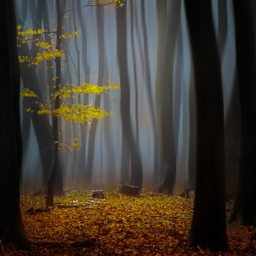 Timeless - JANEK SEDLAR - Fotografia