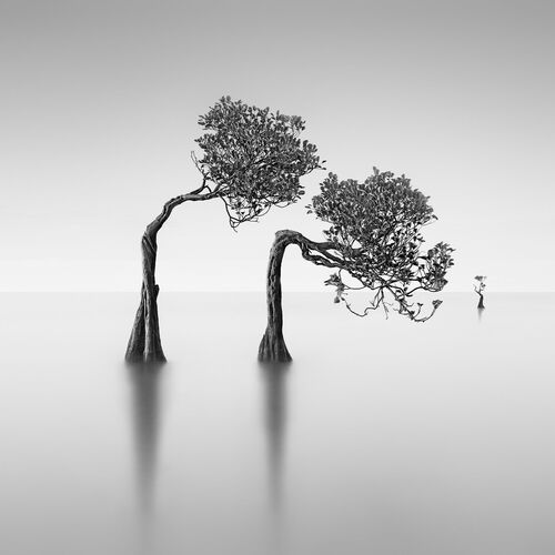 Dancing Mangrove Trees 2 -  JEFFLIN - Photograph