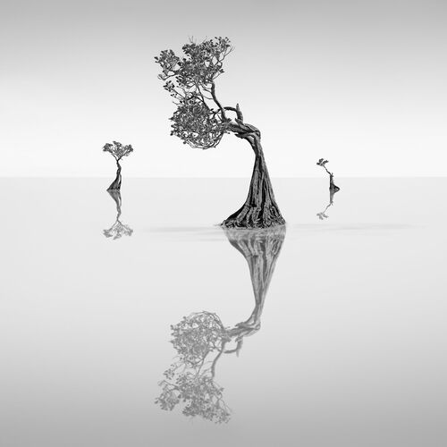 Dancing Mangrove Trees 5 -  JEFFLIN - Photograph