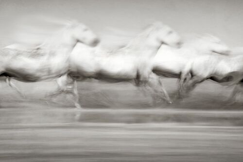 STAMPEDE - JONATHAN CHRITCHLEY - Photograph