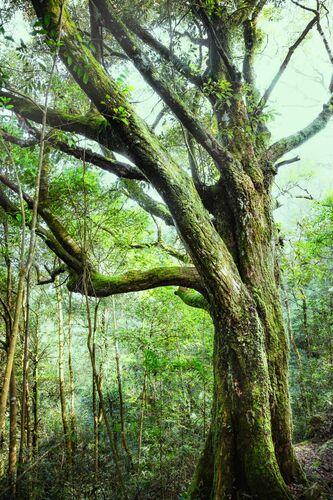 SHIMEN NATIONAL FOREST - Jörg DICKMANN - Photograph
