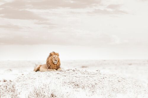 OBSERVING LION - KLAUS TIEDGE - Kunstfoto