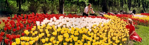 TULIP GARDEN 1964 - KODAK COLORAMA DISPLAY COLLECTION - DONALD E MARVIN - Photograph