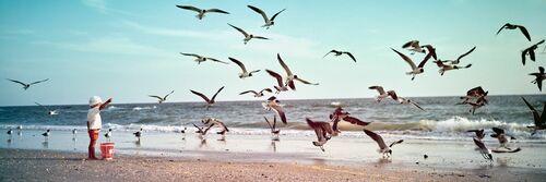 Little boy feeding gulls, 1969 - KODAK COLORAMA DISPLAY COLLECTION - OZZIE SWEET - Fotografie