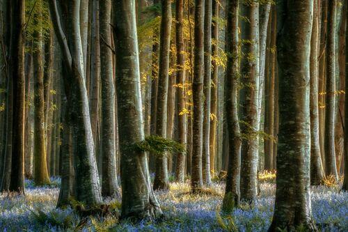 BELLE BLUE - LARS VAN DE GOOR - Fotografia