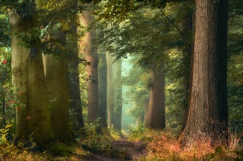 FAIRY FORESTRY