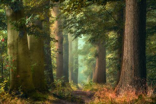 FAIRY FORESTRY - LARS VAN DE GOOR - Fotografia