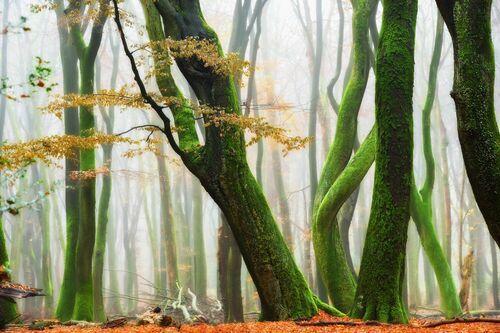 FRIDAY NIGHT'S FOREST DANCE PARTY - LARS VAN DE GOOR - Fotografie