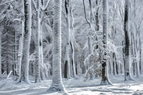 COLD IS COMING - LARS VAN DE GOOR - Kunstfoto