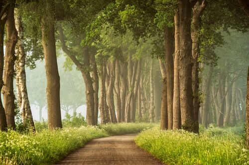 PATH OF DREAMS - LARS VAN DE GOOR - Fotografie
