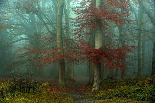 THE ENTRANCE - LARS VAN DE GOOR - Photograph
