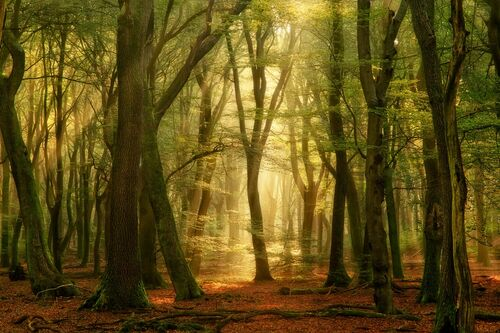 THE OPEN SECRET - LARS VAN DE GOOR - Fotografie