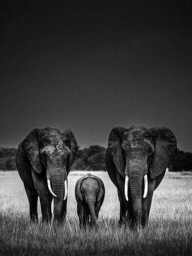 Body Guards - LAURENT BAHEUX - Kunstfoto