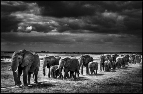 Crossing the Plain I - LAURENT BAHEUX - Photograph