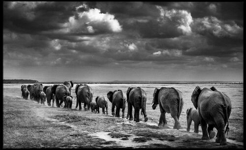 Crossing the Plain II - LAURENT BAHEUX - Kunstfoto