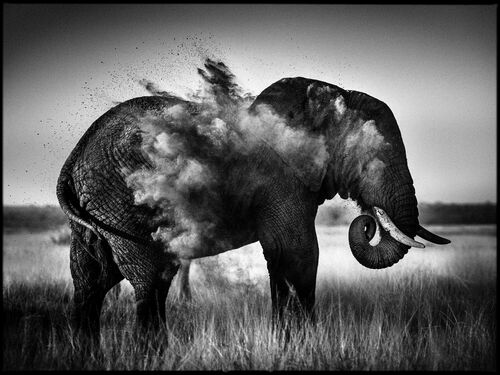 Dust Explosion I - LAURENT BAHEUX - Photograph