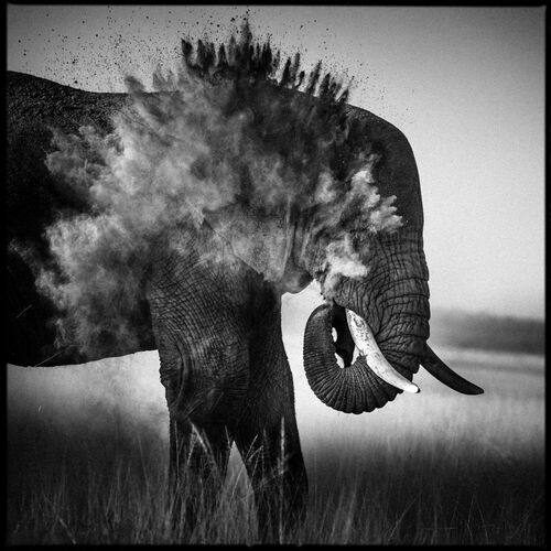 Dust Explosion II - LAURENT BAHEUX - Photograph