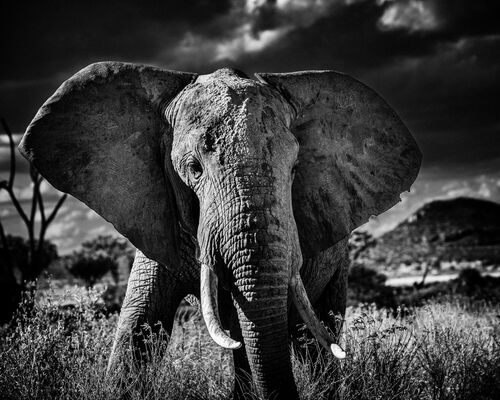 Elephant curieux II - LAURENT BAHEUX - Photograph