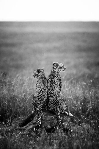 FOR LIFE - LAURENT BAHEUX - Fotografie