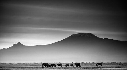 Giants in front of kilimanjaro I, Kenya 2015 - LAURENT BAHEUX - Kunstfoto