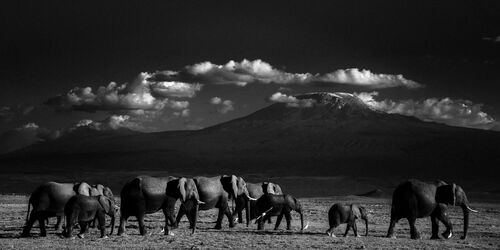 GIANTS IN FRONT OF KILIMANJARO II, KENYA 2015