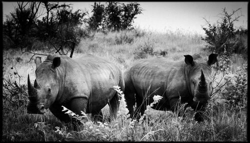 Horn of Africa I - LAURENT BAHEUX - Photograph