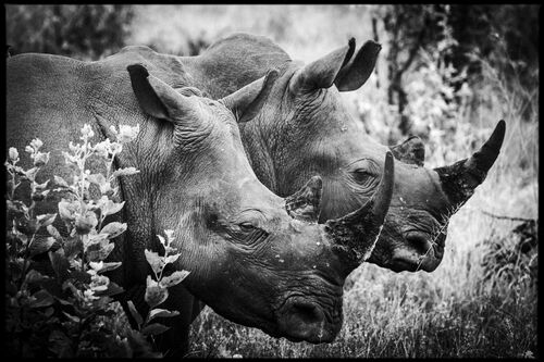 Horn of Africa II - LAURENT BAHEUX - Photographie