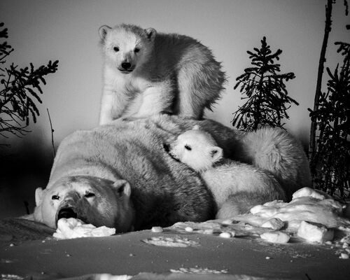 LA SIESTE IMPOSSIBLE - LAURENT BAHEUX - Photograph