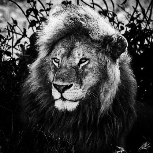 LE ROI SAGE - LAURENT BAHEUX - Photograph